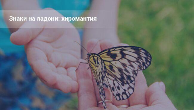 Бабочка на ладони: хиромантия