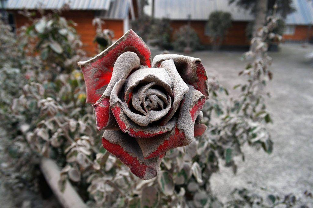 обряд с розами