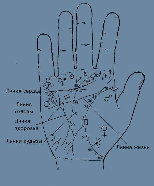 рука с изображенем линий