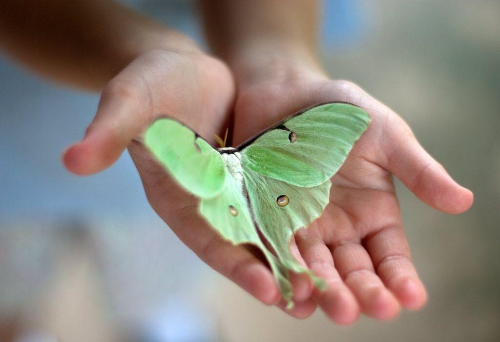 Бабочку нужно поймать очень аккуратно