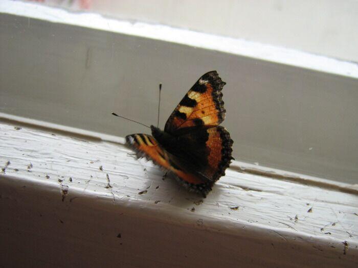Бабочка залетела