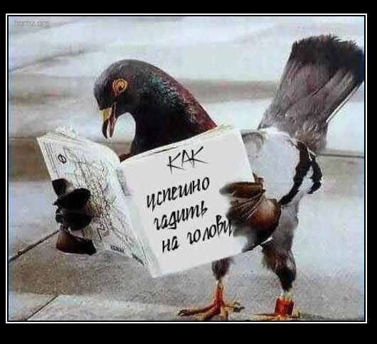 Обучающее пособие для птиц