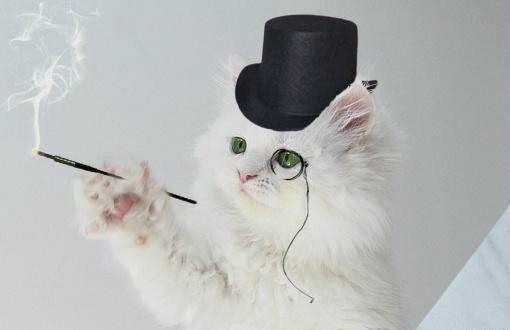 Кот-наследник