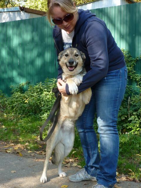 Ласковый пес