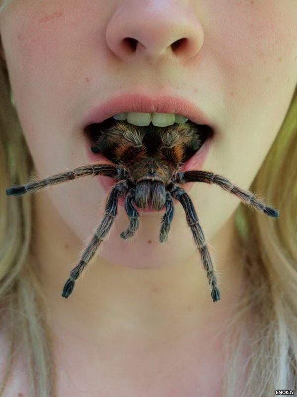 Если съела паука