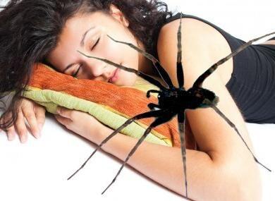 Паук укусил во сне