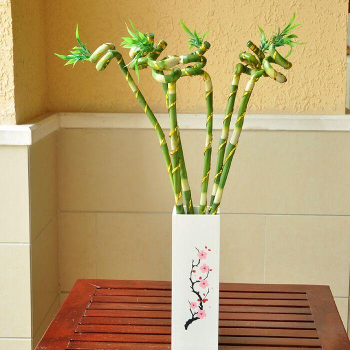 Бамбук фен-шуй