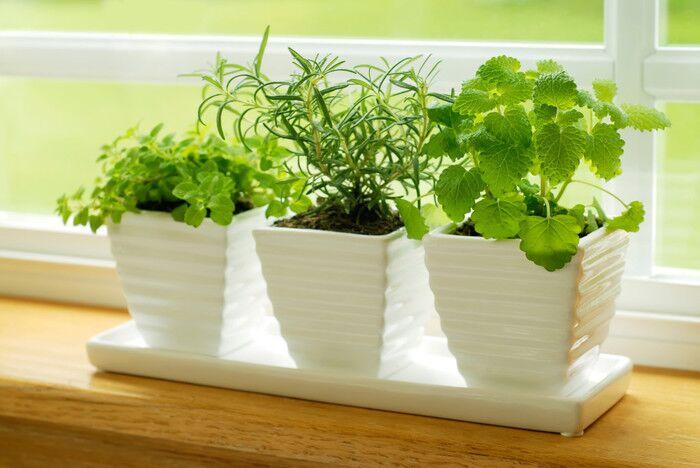Домашние растения - живые существа