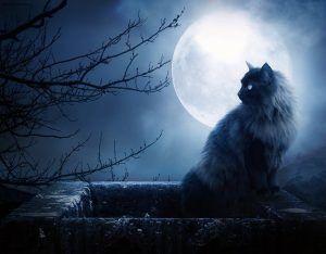 Кошка и полная луна