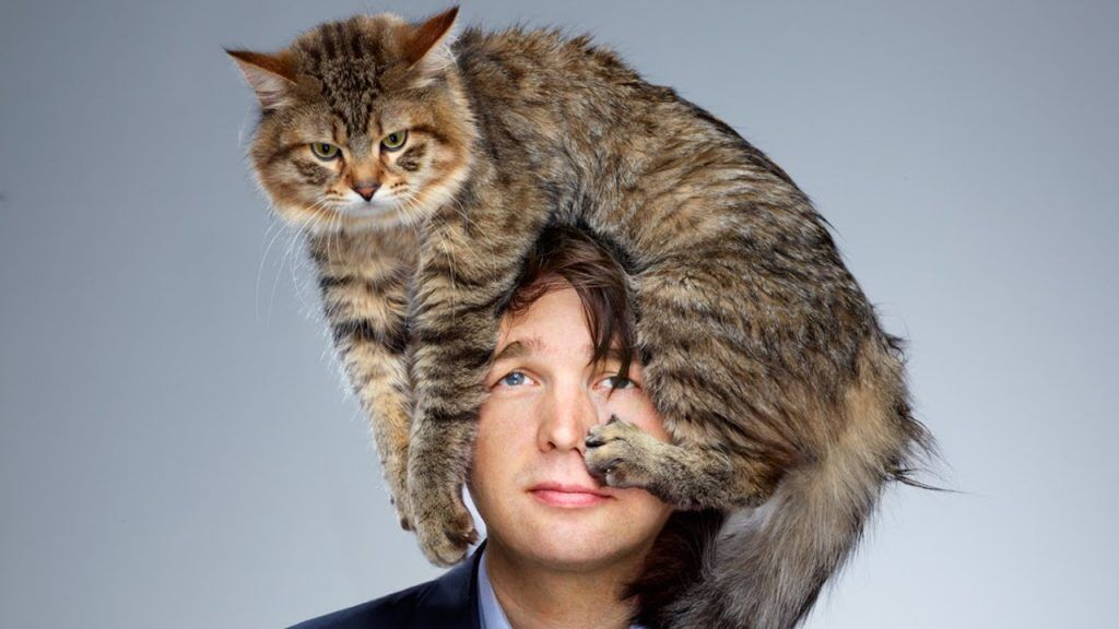 Кошка залезла на голову