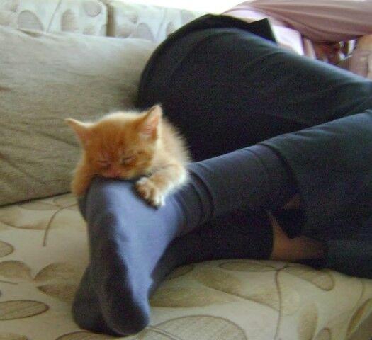 Котенок спит на ноге