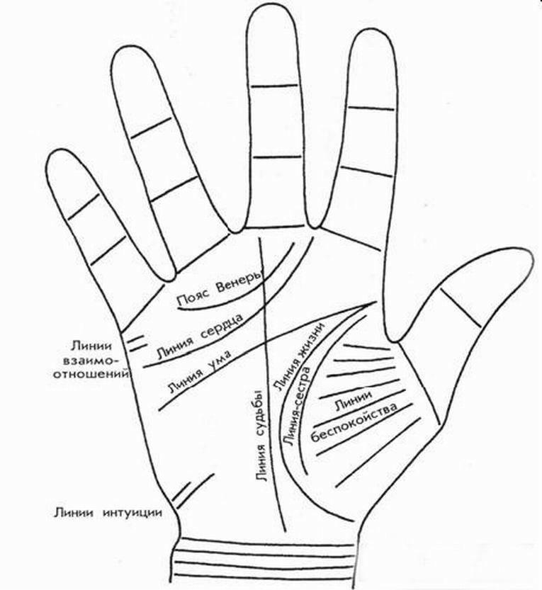 liniya-venery-v-hiromantiii