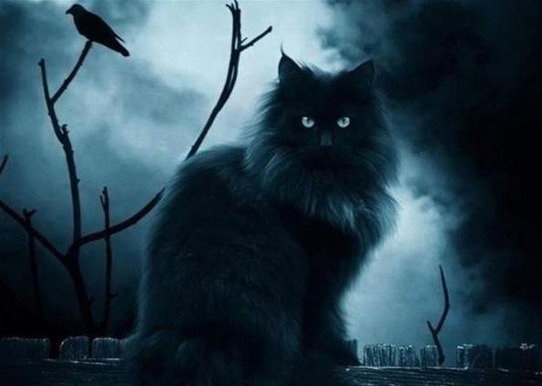 Магический кот