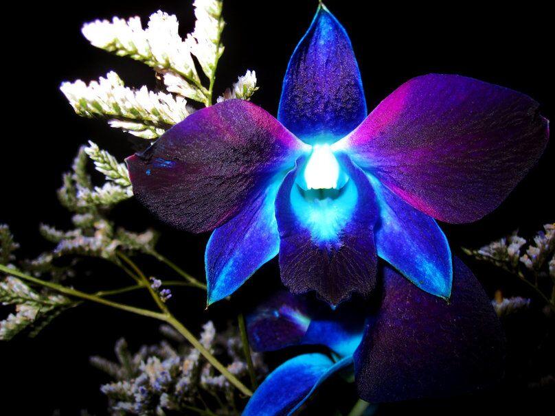 Магия орхидеи