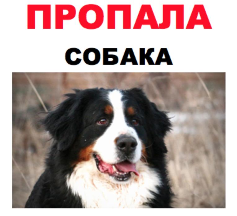 объявление пропала собака