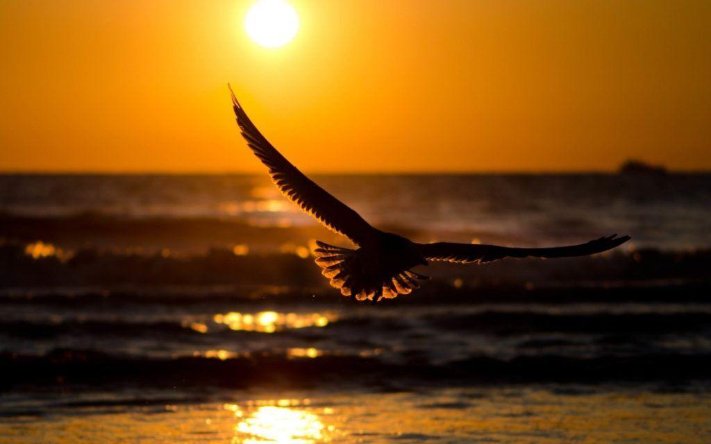 Птица - символ свободы и счастья