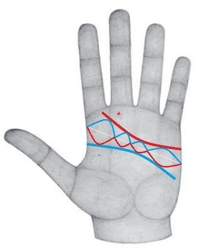Равная длина линии сердца и ума