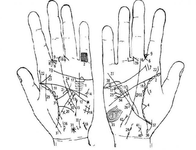 Линии на руках и их значение тайны хиромантии