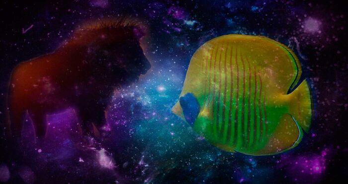 Лев и рыбы