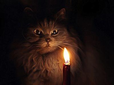 Свеча и кот