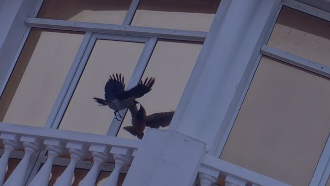 Голубь врезался в окно на работе, примета