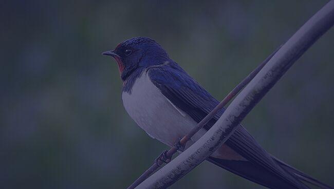 Примета птица ударилась в окно и улетела ласточка