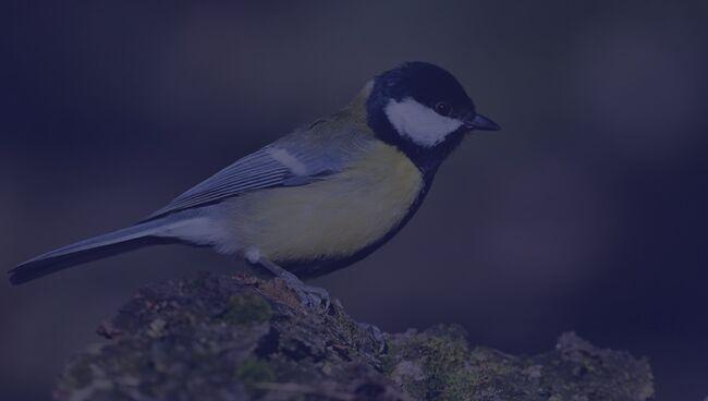Примета птица ударилась в окно и улетела синица