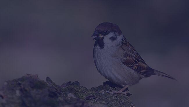 Примета птица ударилась в окно и улетела воробей