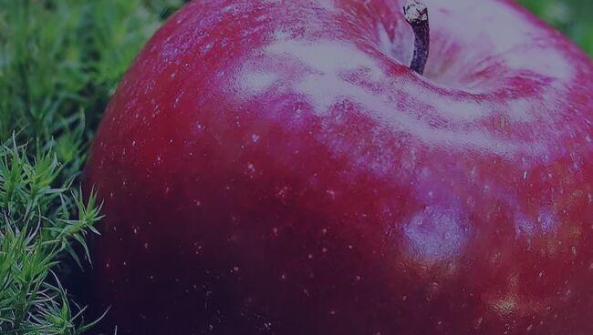 Заговор чтобы присниться любимому на расстоянии с яблоком