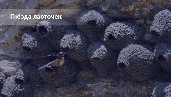 Гнездо ласточки: примета