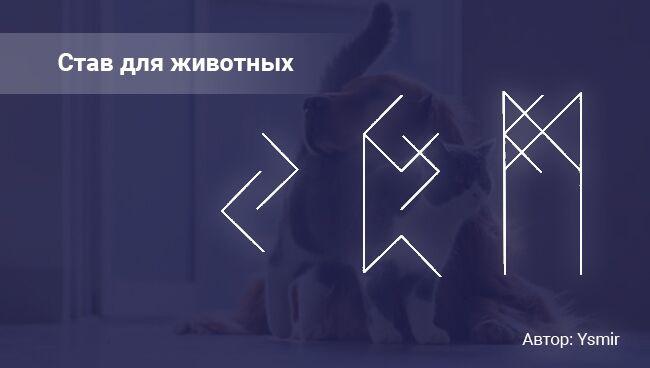 Рунический став на выздоровление кота или собаки