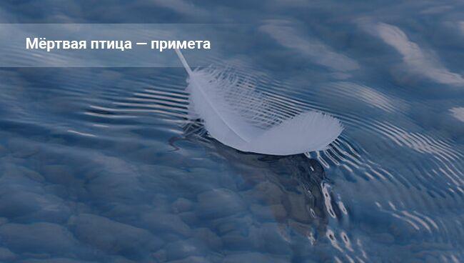 Примета: птица в водоёме