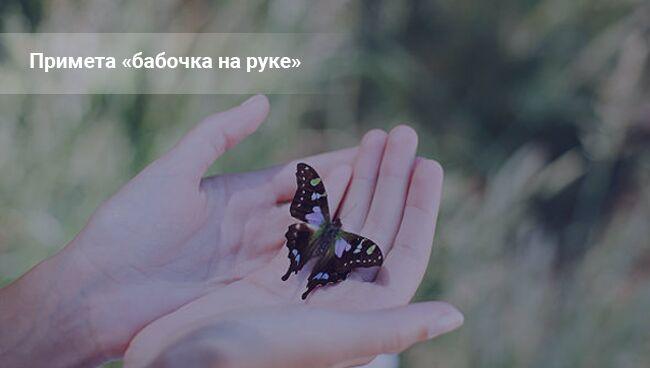 Бабочка на руке ― примета