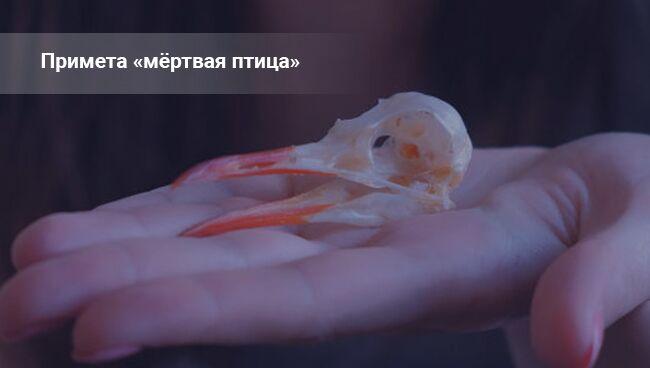 Приметы: мёртвая птица на дороге