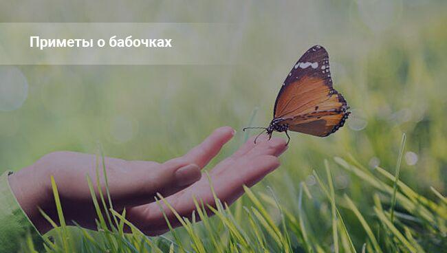 Примета: бабочка села на человека на кладбище