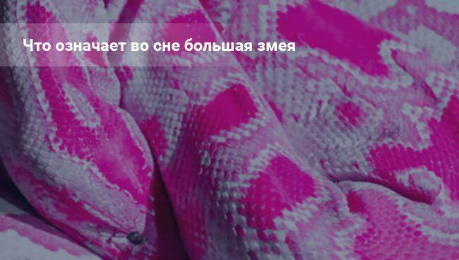 Что означает во сне большая змея
