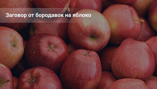 Заговор от бородавок: читать